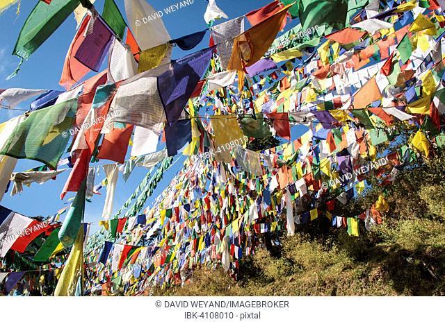 Tibetan prayer flags at the domicile of the Tibetan exile government, McLeod Ganj, Dharamsala, Himal Pradesh, India, Asia