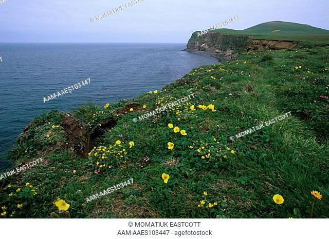 Bering Sea Cliffs, summer flowers on top, St. Paul Isl., Pribilofs, Alaska