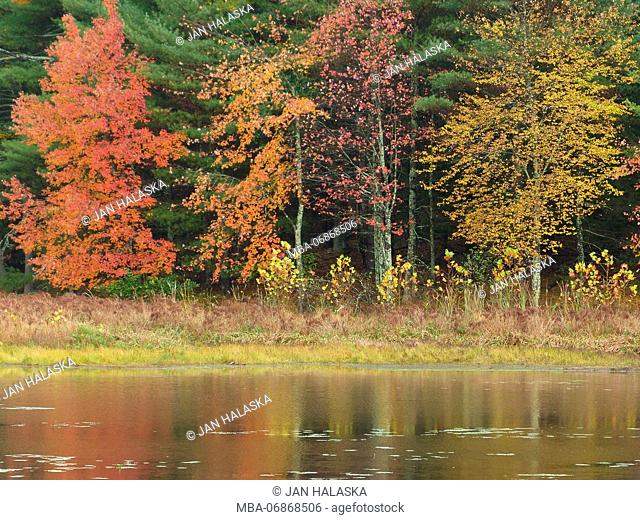 Trees during season change with reflection in lake