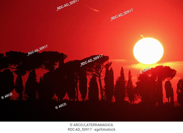 Italian Zypresses and pines at sunset Tuscany Italy Cupressus sempervirens