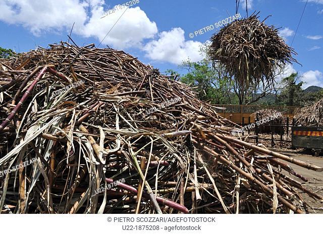 Mauritius, sugarcane at the Domaine de L'Etoile natural reserve
