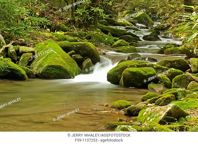 Cosby Creek, Great Smoky Mtns Nat  Park, TN