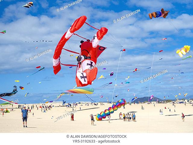Fuerteventura, Canary Islands, Spain. 10th November 2018. A Red Baron kite swoops down as hundreds of kites fly on El Burro beach dunes near Corralejo at the...