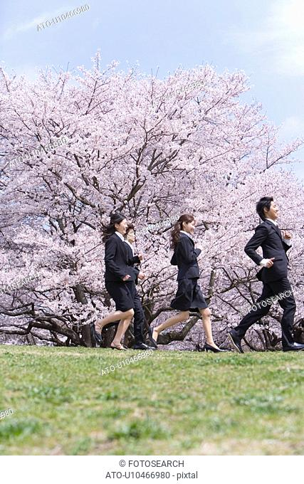 Young business people running in the field of cherry blossoms, side view, low angle view, Japan