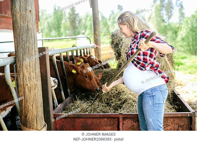 Pregnant woman working on farm