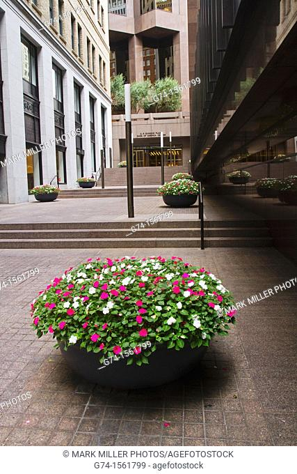 """Flower Pot Arrangement, San Francisco, California, USA  """"Editorial Only"""""""