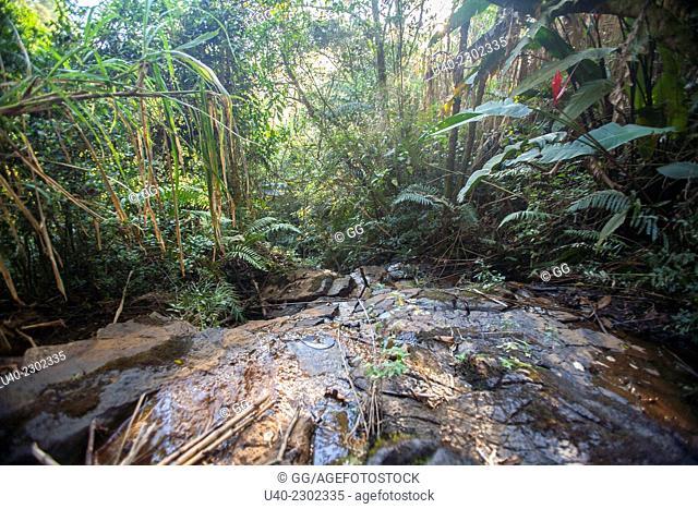 Guatemala, Alta Verapaz, stream in rainforest