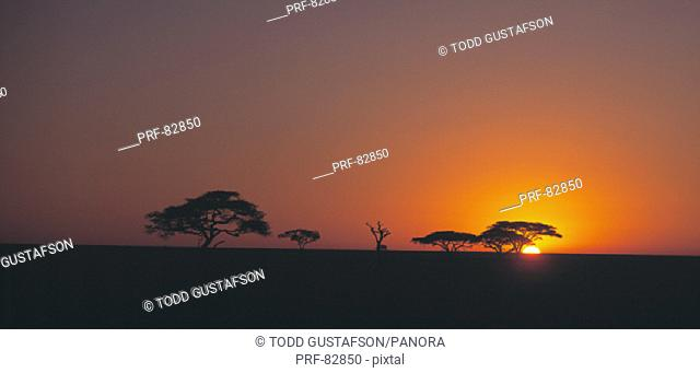 Sunrise Serengeti Tanzania Africa