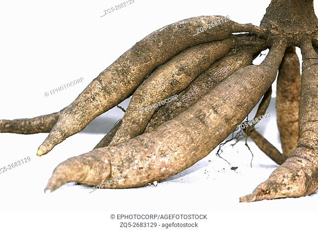Few roots of sweet potato
