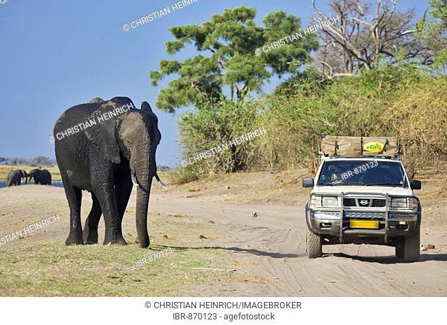 Jeep next to an African Bush Elephant (Loxodonta africana) on the Chobe River, Chobe National Park, Botswana, Africa