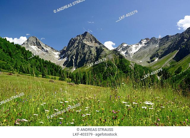 Flowering meadow in front of Gloedis and Ganot, Schober range, National Park Hohe Tauern, East Tyrol, Austria