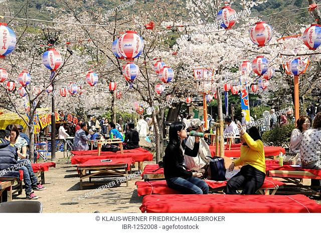 Cherry Blossom Festival in Maruyama Park in Kyoto, Japan, East Asia, Asia