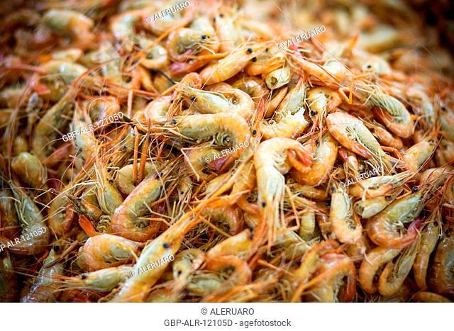 Shrimp, Fair of the Fish, Barão de São Domingos Collapse, Amazônia, Manaus, Amazonas, Brazil