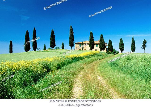 House with cypress trees near Pienza. Val d'Orcia. Siena province. Tuscany. Italy