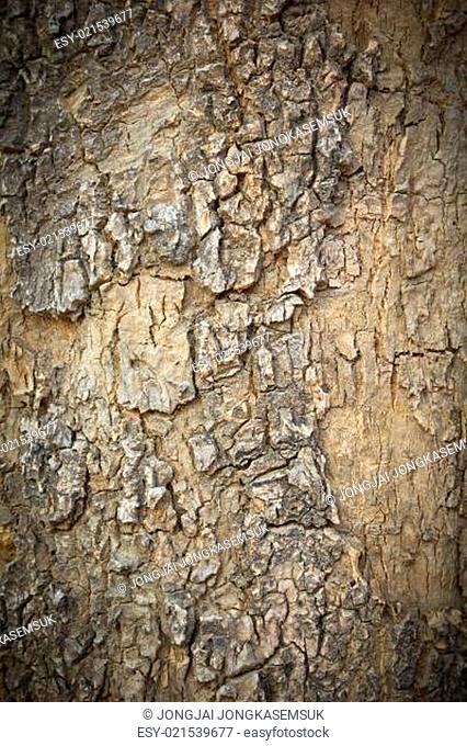 Tree's texture