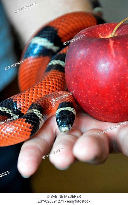 Apple Snake