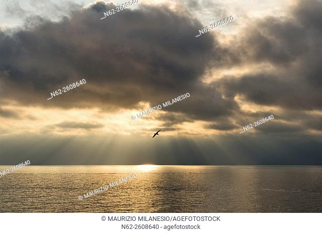 Cinque Terre Liguria Italy, a seagull flies against the light at sunset on the bottom of the sun's rays pass through the clouds