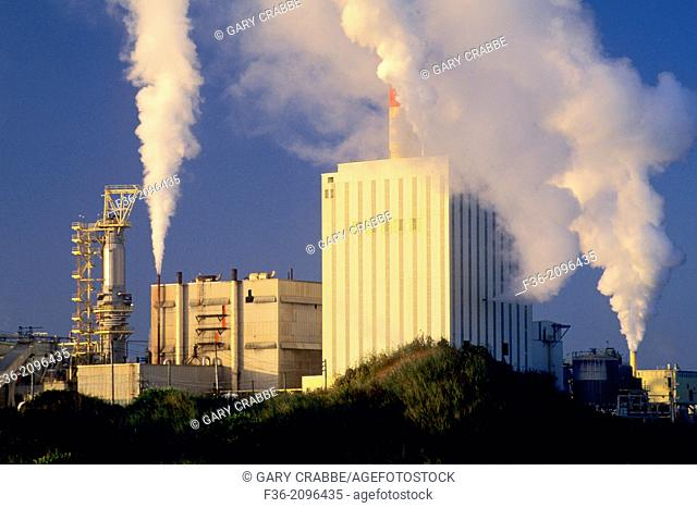 Pulp Mill and steam clouds at sunrise near Manila, Samoa Peninsula, Humboldt County, CALIFORNIA