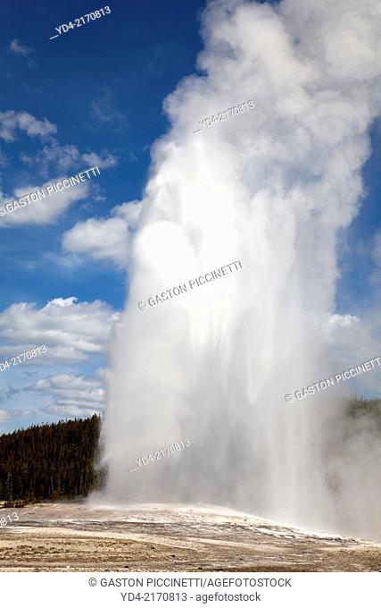 Old Faithful geyser eruption in Yellowstone National Park, USA