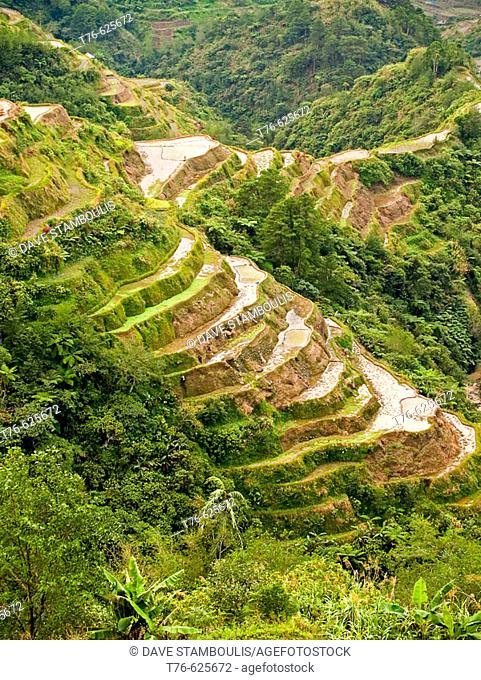 the world famous Banaue rice terraces, a UNESCO World Heritage Site, Philippines