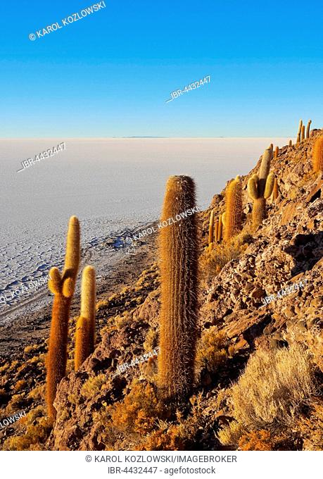 Salar de Uyuni, view of Incahuasi Island with cacti (Trichocereus pasacana), Daniel Campos Province, Potosi, Bolivia