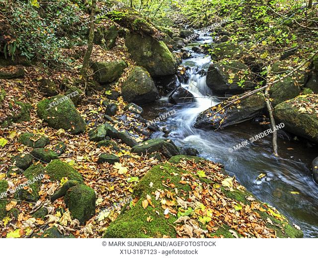 Fosse Gill running through Skrikes Wood in autumn near Pateley Bridge North Yorkshire England