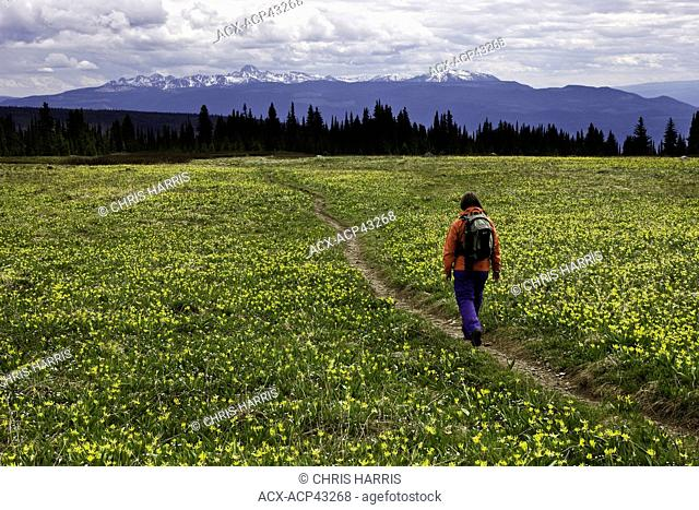 Hiker amidst the alpine flowers in Wells Grey Park in British Columbia, Canada