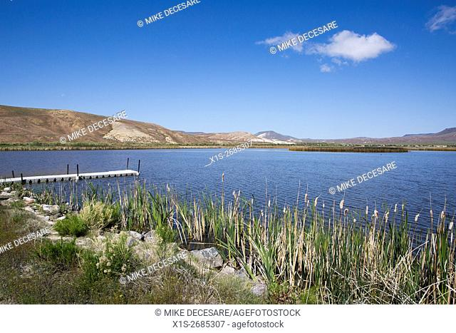 A wildlife preserve with duck ponds thrives in the Nevada landscape that is more typically desert