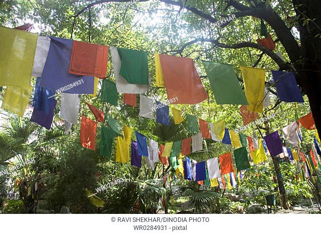 Tibetan prayer flags hanging on trees in Norbulinka monastery , Dharamshala , Himachal Pradesh , Himalaya , India