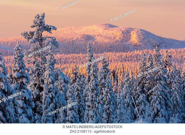 Morning sun shining on snowy mountain with snow on trees in Gällivare, Sweden, Lapland, Swedish lapland