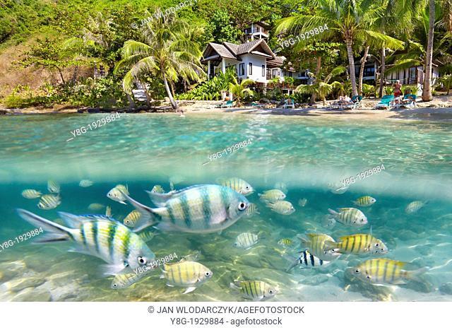 Thailand - half undrewater sea view of fish at Ko Samet Island, Thailand, Asia