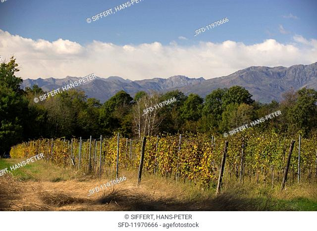 Vineyards in northern Piedmont owned by Luca und Paolo De Marchi in the region of Lessona