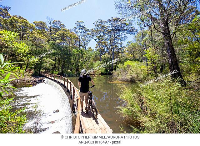 Rear view of man with mountain bike crossing bridge on Margaret River in The Pines Trails, Western Australia, Australia