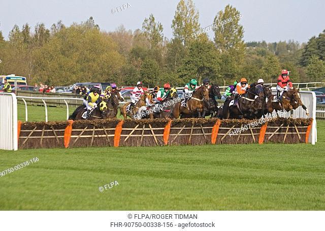 Horse racing, Thoroughbred racehorses jumping fence during race, Fakenham Races, Norfolk, England