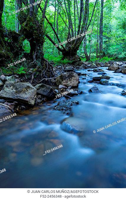 Bayas river, Gorbeia Natural Park, Alava, Basque Country, Spain, Europe