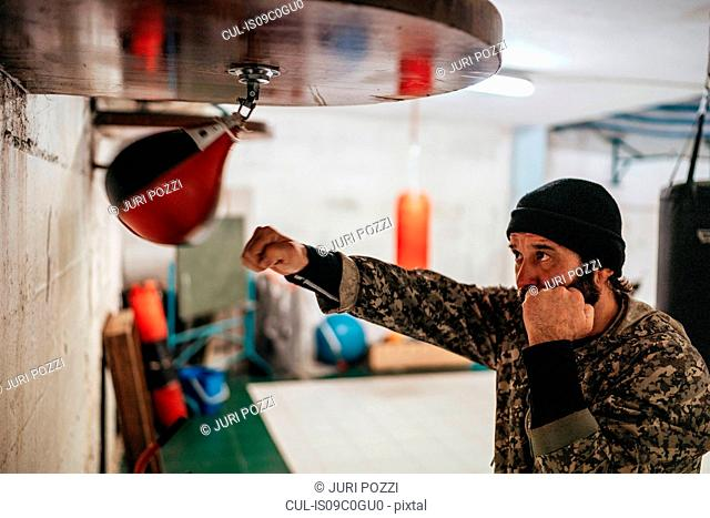 Boxer training with punch bag in gym
