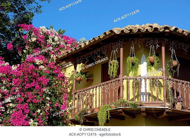Bougainvillea adorns terrace at Plaza Mayor, Trinidad, Cuba