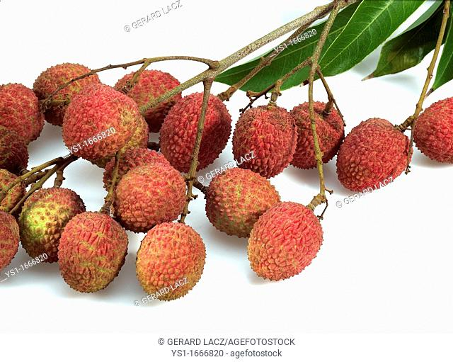 Litchi or Litchee, litchi sinensis, Exotic Fruits against White Background