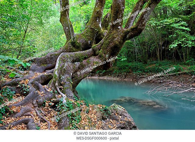 Spain, Cuenca, Hoz de Beteta, Trees at Guadiwla river