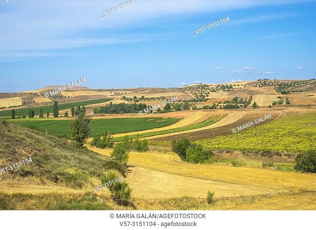 Cultivation fields. Hita, Guadalajara province, Castilla La Mancha, Spain