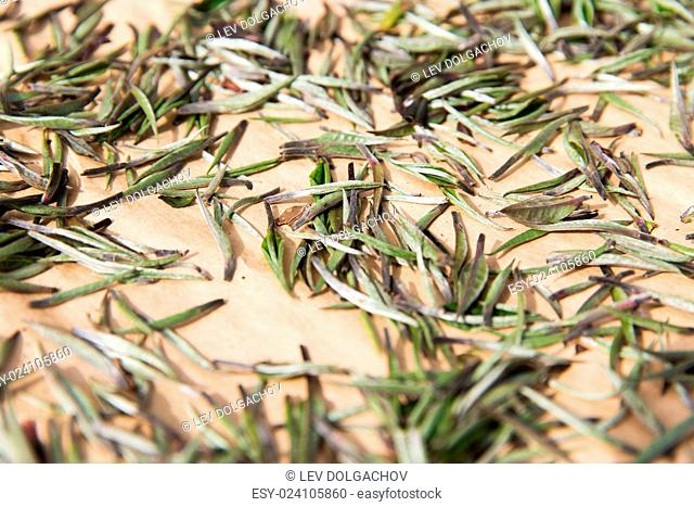 agriculture, manufacture, industry and farming concept - close up of tea raw drying