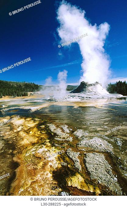 Castle Geyser erupting. Yellowstone National Park. Wyoming. USA
