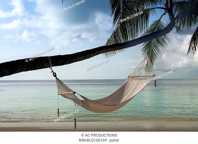 Hammock hanging on palm tree at beach