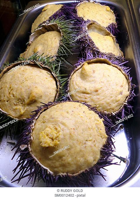 Gastronomy. Sea urchin mousse