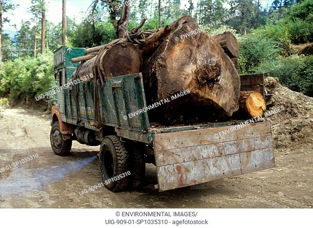 LOGGING - BHUTAN. The vast temperate forests are one of Bhutans major natural resources. . About 60 of the country is covered by forest, much of it untouched