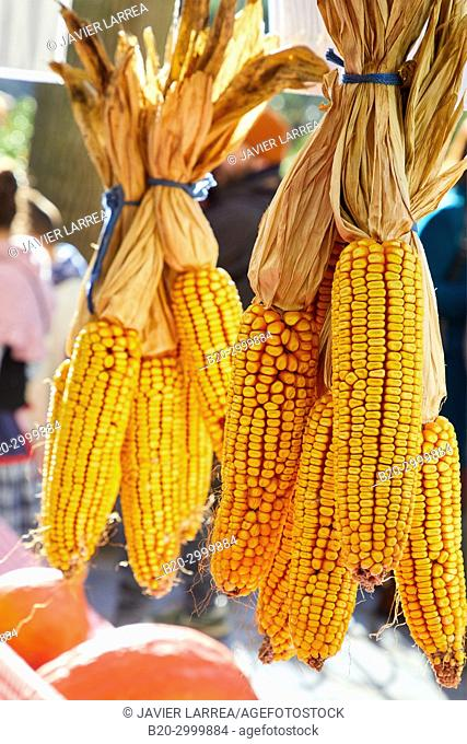 Corn cobs, Feria de Santo Tomás, The feast of St. Thomas takes place on December 21. During this day San Sebastián is transformed into a rural market