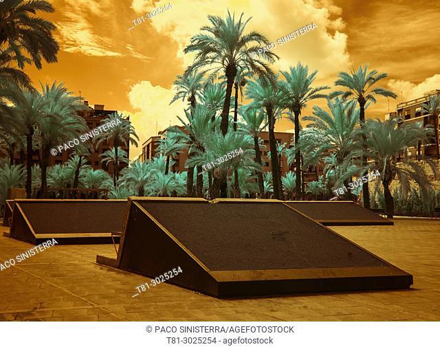 Palmeras at ELCHE, Alicante Spain