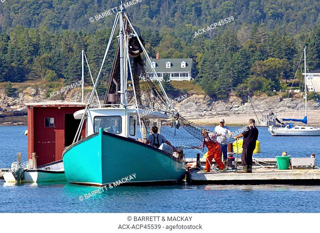 People working on fishing net, North Head harbour, Grand Manan Island, Bay of Fundy, New Brunswick, Canada
