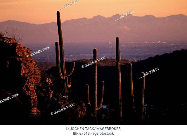USA, United States of America, Arizona: Saguaro National Park, near Tucson, at sunset