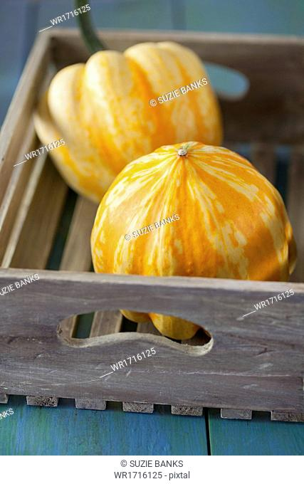 Festival Squashes in Wooden Box